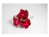 Click here for larger picture - Tea Roses X3 Fuchsia  £1.79